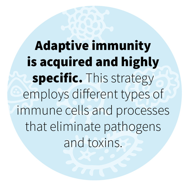 Adaptive immunity is acquired and highly specific. This strategy employs different types of immune cells and processes that eliminate pathogens and toxins.