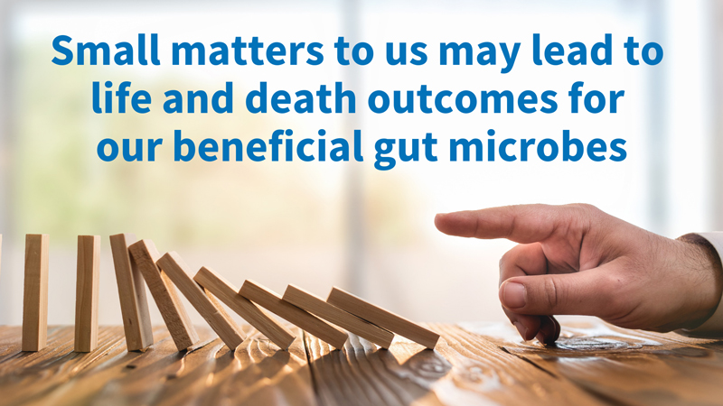 Image: Small maters to us may lead to life and death outcomes for our beneficial gut microbes.